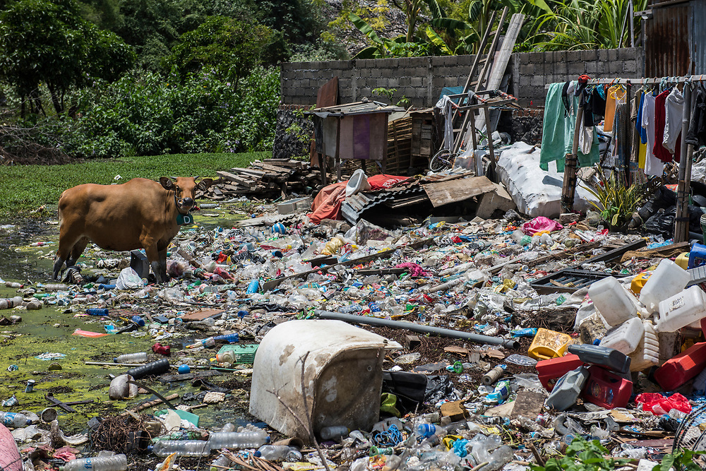 Plastic recycling illegal<br /> Bali Island<br /> West Nusa Tenggara <br /> Lesser Sunda Islands<br /> Indonesia<br /> Illegal plastic recycling where cow owners pay grazing rights to let their cows forage in the garbage. Deforested mangrove