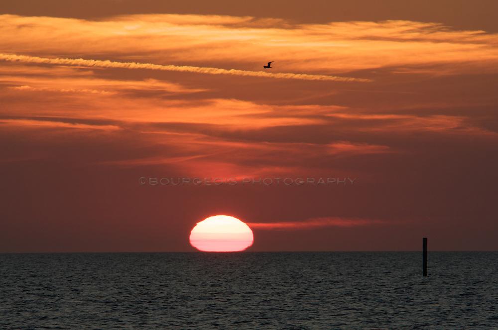 Seagull flying over sunset