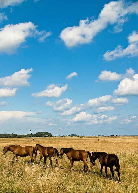 Under blue summer skies, curious horses walk away in single file from the ruins of Saint Birgitta's Chapel at Kapelludden. This wetlands area is a promontory that lies four kilometres east of the village of Bredsättra, which lies on the east coast of the Swedish island of Öland.
