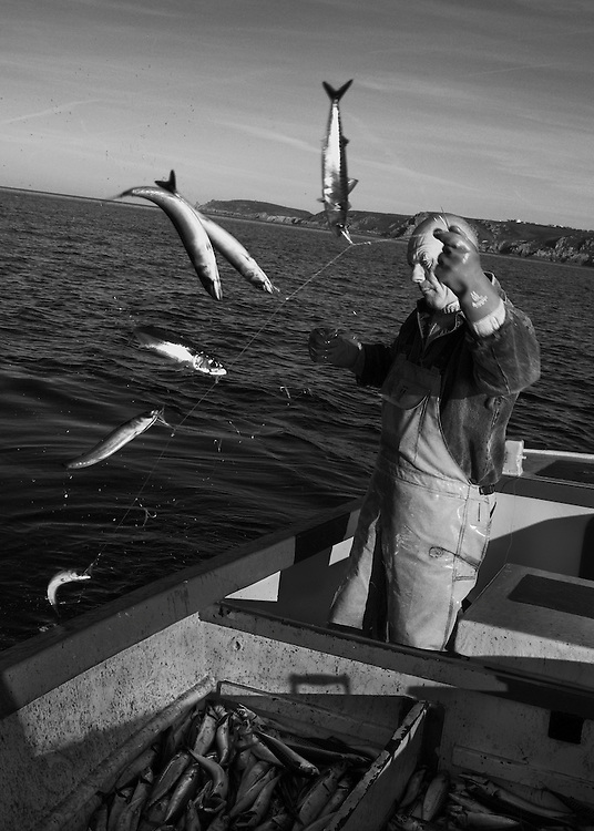 Joey Jeffery, handline fisherman, hauling in mackerel, working out of Newlyn, Cornwall, England.<br /> <br /> For most of the winter and spring months Joey will fish for mackerel along the coast from Newlyn and as the fish move 'around the corner' to St. Ives during the summer months, the fishermen will follow them. <br /> <br /> Handlining for mackerel is one of the most eco-friendly and sustainable forms of fishing and is usually done in the morning and evening. Joey will leave the harbour as early as 3.30 a.m. in order to reach the fishing grounds by dawn. <br /> <br /> After a few hours, the boat is packed full of fish and the hour long journey back to Newlyn is made so that the catch can be unloaded, graded, weighed and packed with ice into the market's freezer, ready for the following morning's auction.<br /> <br /> Normally he would make a second trip later on in the day, but fishing has been good this morning and he senses that the shoals are still there and so heads straight back out. <br /> <br /> Joey has had various jobs within the fishing industry in Newlyn and now, as a highly experienced handline fisherman, he will be fishing for the much prized Bass later on in the year.<br /> <br /> (Please see Galleries for further information).