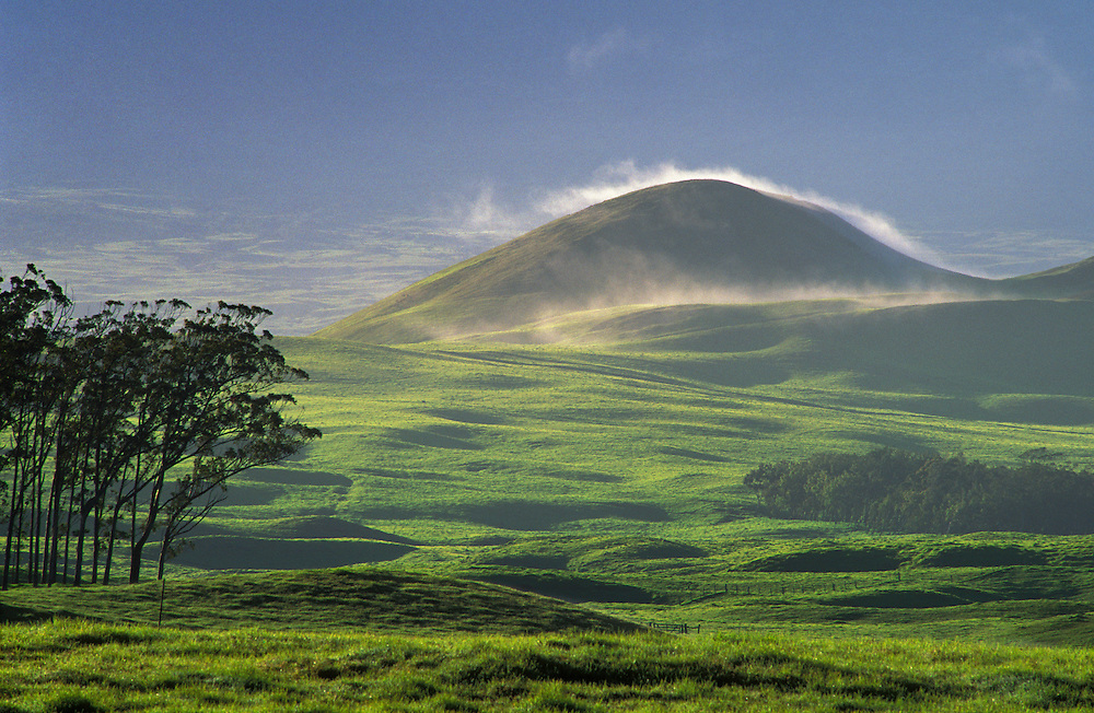 Trees, pasture and grassy pu'u with fog; Parker Ranch lands, Waimea area, Island of Hawaii.