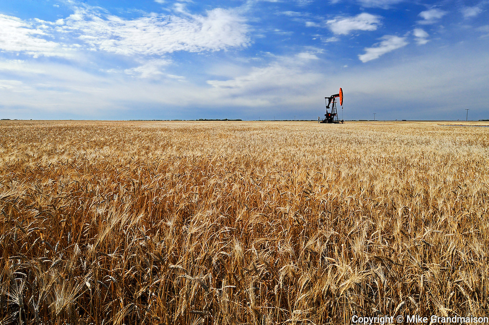 Oil pump jacks and wheat field<br /> Forget<br /> Saskatchewan<br /> Canada