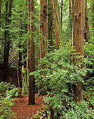 Large Format Photos, Muir Woods National Monument