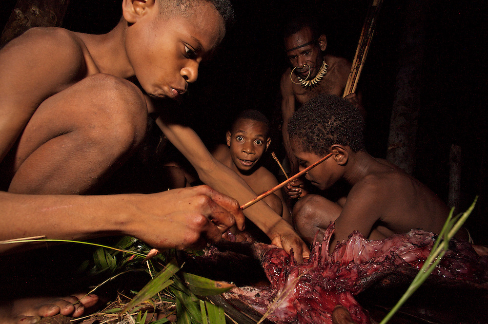 Young and old participate in butchering the pigletts for the pig feast. West Papua is home to over 300 tribes. They have inhabited the island for more than 40,000 years. Many of the last remaining tribal cultures on our planet can be found in West Papua. An astounding 15% of the world's languages are spoken there, by just 0.01% of the global population.