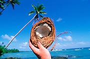 Coconut<br />