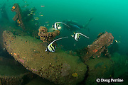 diver and Moorish idols, Zanclus cornutus, on the wreck of<br /> the Seian Maru, a Japanese cargo vessel sunk by Allied air strike on Nov. 19, 1944; the wreck lies on its port side at a depth of 25 m near Alava Pier in Olongapo Harbor, Subic Bay, Philippines; MR 378