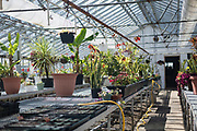A view inside the greenhouse at the Tomah VA Facility in Tomah, Wisconsin, Tuesday, April 24, 2018. Gardening and horticulture are one of the many therapeutic programs offered at the facility for veterans.