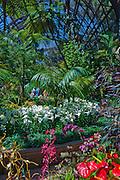 Botanical,  Garden, Balboa Park, San Diego, Ca