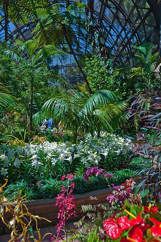 Botanical, Garden, Balboa Park, San Diego, Ca.