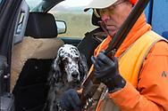 Bob Ciulla's English setter, Ryman, watches him assemble his shotgun during a pheasant hunt in Montana