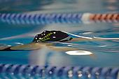 20130613 Wellington Secondary Schools  Regional Huia Cup Swim Relays