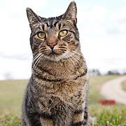 20130521 Farm Cats