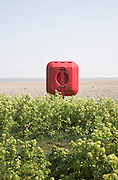 Red lifebelt post on beach blue sky, shingle beach, Alexanders plants, Aldeburgh, Suffolk, England