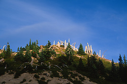 Sranding Dead Trees, Mt. St. Helens National Volcanic Monument, Washington, US
