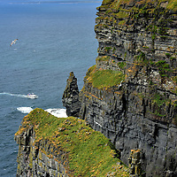 Bird Colonies at Cliffs of Moher near Liscannor, Ireland<br /> The common gulls flying gracefully along this Irish headland are among the 30,000 birds nesting at the Cliffs of Mohr.  Two more of the 30 species of seabirds are the razorbill and chough. The star residents are a colony of 1,300 adult Atlantic puffins.  It is virtually impossible to see the birds from the top of the cliff except through a few telescopes along the wall. Serious bird watchers get a better view by taking a one-hour cruise.  Even then you can only get so close.  Over 600 feet of water at the base of the cliff is a protected zone under the EU Birds Directive of 1989.
