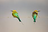 Australian Wildlife Photography and Nature
