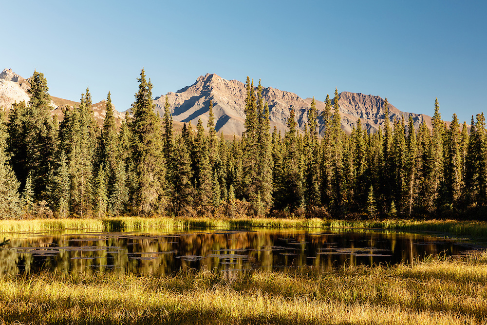 Evening light on a pond near Teklanika campground in Denali National Park in Interior Alaska. Autumn.