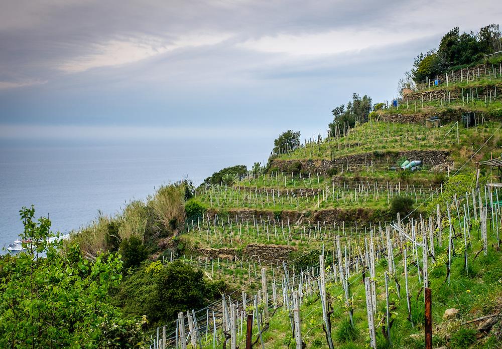 VERNAZZA, ITALY - CIRCA MAY 2015:  Vineyards around Vernazza in  Cinque Terre, Italy.