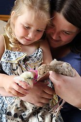 Grandmother and grandaughter with chicks