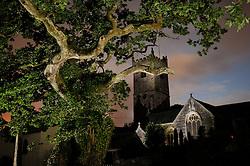 Meavy Oak and the Church behind in Meavy, Devon, Southern Dartmoor - http://www.legendarydartmoor.co.uk/meavy_royal_oak.htm