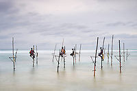 Sri Lanka, province du sud, plage de Weligama, pêcheurs sur échasses au crépuscule // Sri Lanka, Southern Province, South Coast beach, Weligama beach, Stilt fishermen on the coast at dusk