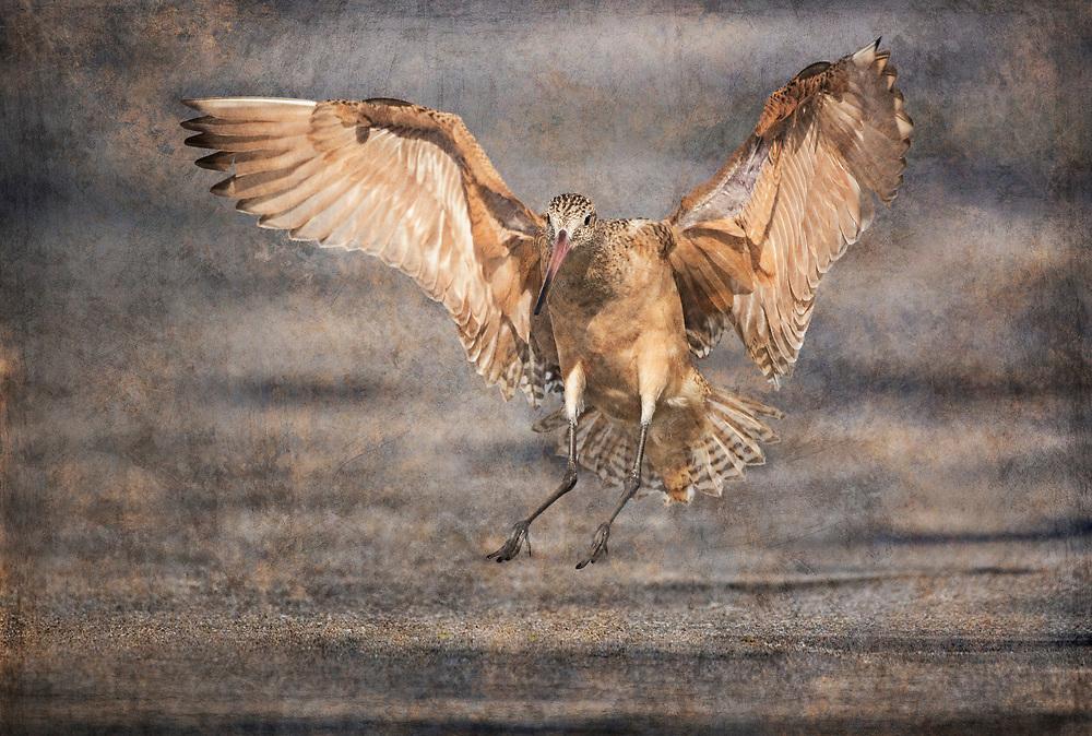 Godwit Landing