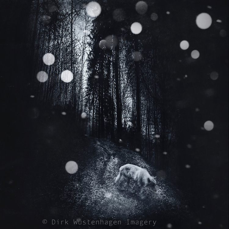 Composing using my own photos - wolf on a forest path