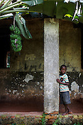 A boy stands in the ruins of an old building under a bunch of Ambon 2 bananas at Kilometer 5, Yangambi, DR Congo, on Saturday, Dec. 6, 2008. Km 5 was the research complex where the preeminent banana expert and Belgain scientist Edmond De Langhe planted his bananas and where he lived. He gathered bananas from all over the world to plant here and worked on developing subsistence bananas and investigating banana history in Africa. When De Langhe left in 1960 his bananas, including Ibota Ibota (aka Yangambi km5), spread all over Congo.