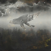 Society6 prints: http://bit.ly/2yXPX8S<br /> Dreamy surreal scenery with a whale silhouette and parts of Hubble telescope images that you can find here: <br /> copyright: http://www.nasa.gov/<br /> http://www.spacetelescope.org/<br /> this is always worth a visit!!