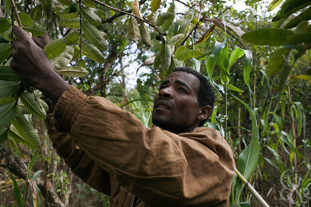 Coffee farmer Hagirso Funte (age 32) checks his fields after a rainstorm February 24, 2007 in the Sidamo coffee region of southern Ethiopia near the town of Yirgalem. Funte struggles to make enough money through coffee farming to support his wife and four children and says that coffee prices for Ethiopian farmers need to increase in order for him to get ahead.