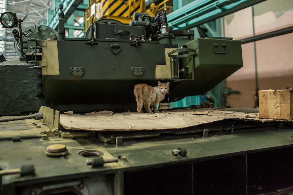A cat stands on a tank under assembly on the tank assembly line at the Malyshev Tank Factory on Wednesday, February 11, 2015 in Kharkiv, Ukraine.