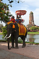 Elephant Tour at Ayutthya - A group of dedicated individuals with a lifelong love of elephants, concerned about the problems facing these magnificent creatures founded the Ayutthaya Elephant Camp in 1996 to provide homes for elephants forced to earn a living in the streets of Bangkok. Today, these same elephant work giving rides to tourists on the site of the ancient Ayutthaya Historical Park.  This innovative project to help working elephants was developed with the cooperation of the Elephant Care Assembly.