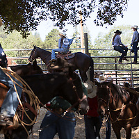 Horses and their riders wait in the shade before taking to the arena for their events. Other contestants perch on the rails to get a better look at rodeo action.