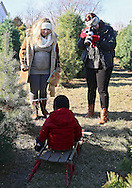 Robyn Rasmussen (right) of Ruby Ellen Photography shoots a portrait of Max Almeida (center), 2, as his mother, Jasmine Almeida (left) of Iowa City, looks on at Barnes Tree Farm in Iowa City on December 7, 2013.