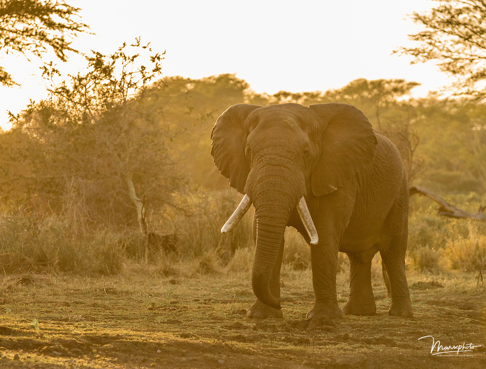 A Selection of African, non-predatory land mammals from countries including Kenya, Botswana, Namibia and South Africa.