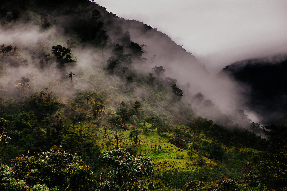 The Cloud Forest Reserve early in the morning.