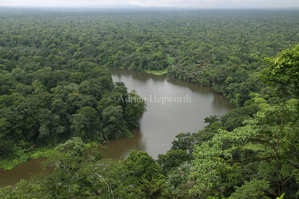 Natural canal (Rio Penitencia) in Caribbean lowland rainforest. View north from Cerro Tortuguero, Barra del Colorado Wildlife Refuge, Costa Rica. <br />