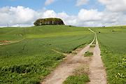Path leading towards chalk scarp slope at Furze Knoll, Morgan's Hill, Marlborough Downs, Wiltshire, England, UK