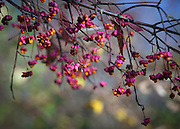 Colourful Autumn and Winter Berries