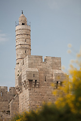 Middle East, Israel, Jerusalem, Tower of David and yellow flowers