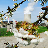Spring blossom and Leibstadt nuclear power station, which stands close to the German border.<br />