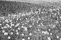 I was blown away by the vast sea of flowers which seemed<br />