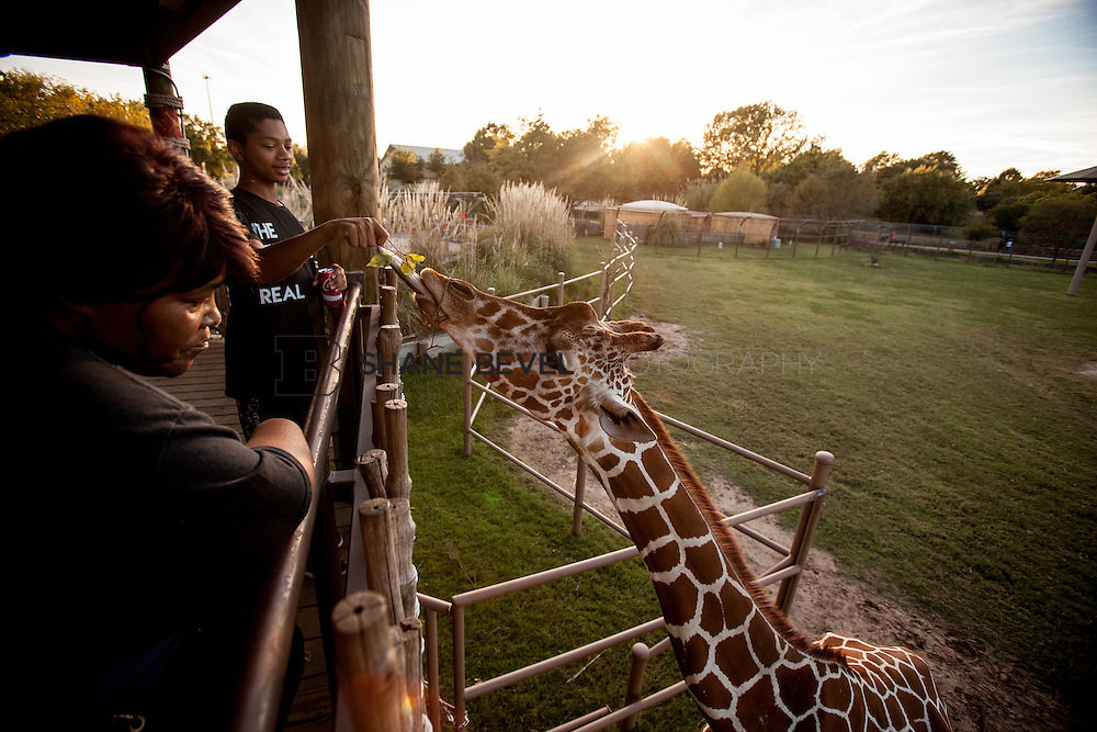 10/8/16 6:20:41 PM --  SFHS All-Employee Safari at the Tulsa Zoo. <br /> <br /> Photo by Shane Bevel