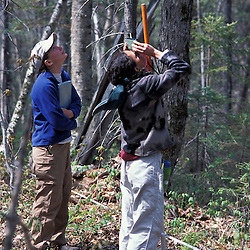 Kibby Township, ME.  Field researchers for Manomet Observatory measuring canopy height on a tract of Maine timberland.  Late successional northern hardwood forest.