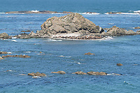 Sea Lions and Seals on Shell Island, Cape Arago State Park Oregon