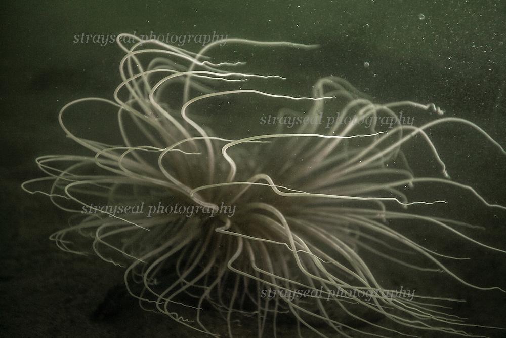 Underwater wildlife filming in Scotland.