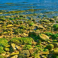 Seashore stones covered with moss.