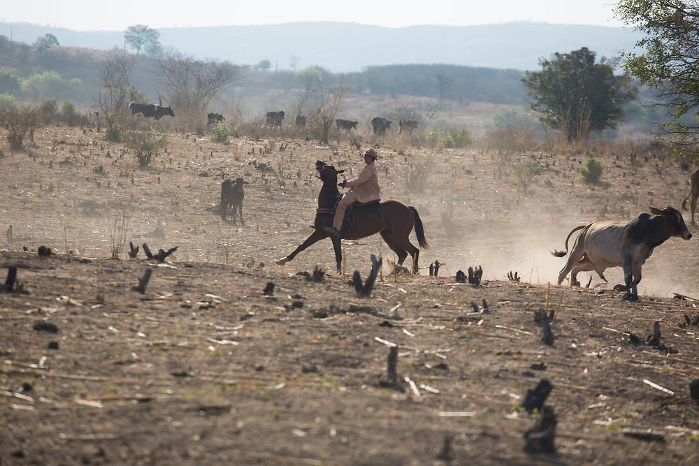 Nova Olinda_CE, 16 de Setembro de 2012<br /> <br /> Na foto, o vaqueiro Iranildo Rufino vestido com trajes de couro feitos por Espedito Seleiro<br /> <br /> Foto: LEO DRUMOND / NITRO