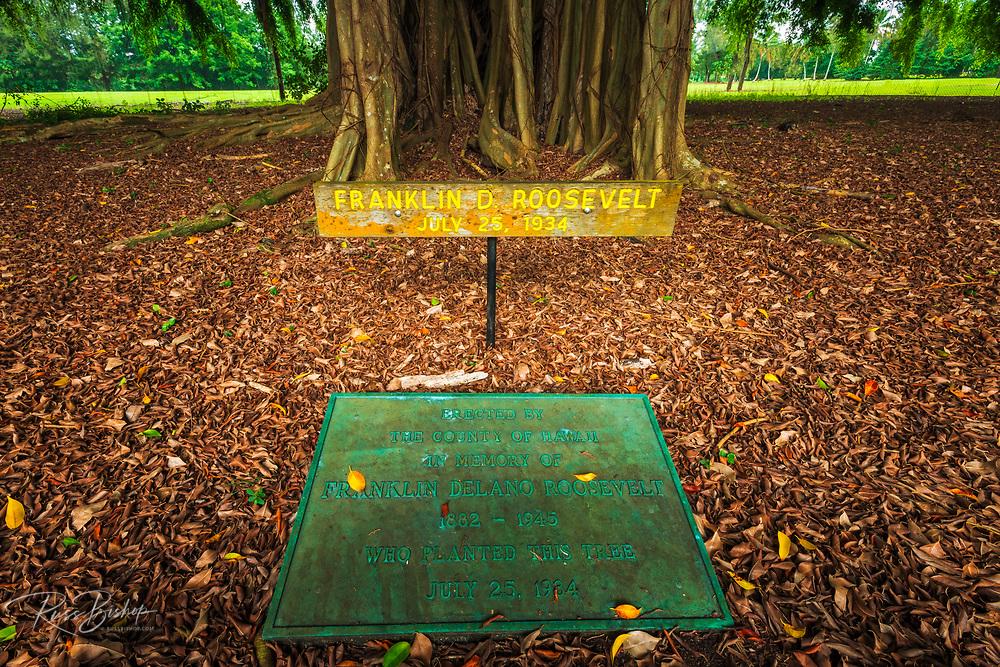 Celebrity planted banyan tree (Franklin D. Roosevelt) on Banyan Drive, Hilo, The Big Island, Hawaii USA