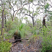 Bush on Fraser Island, Queensland, Australia, near Kingfisher Bay and Lake McKenzie. High resolution panorama.